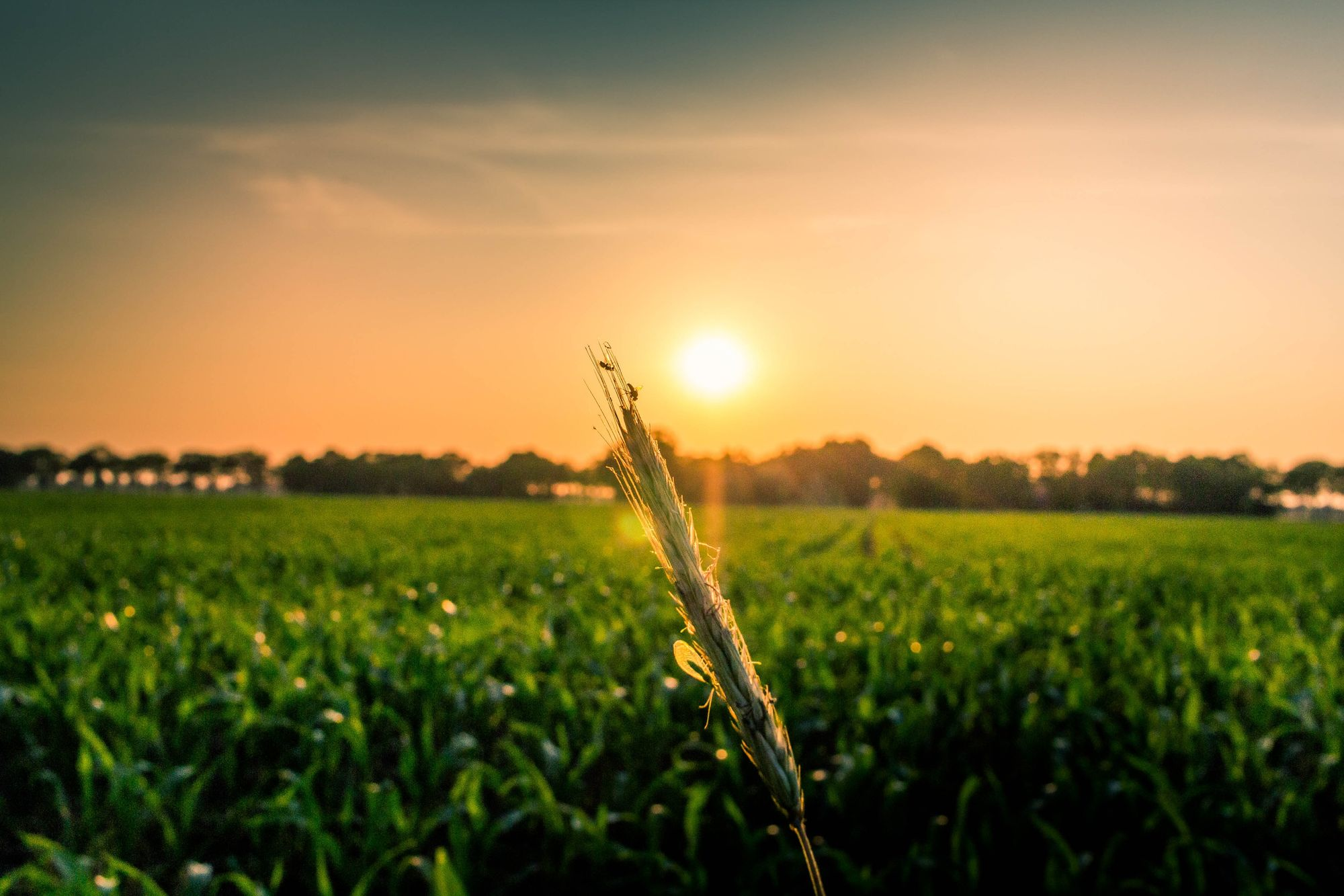 From Seed To Table: How Fintech Will Optimize Food Systems